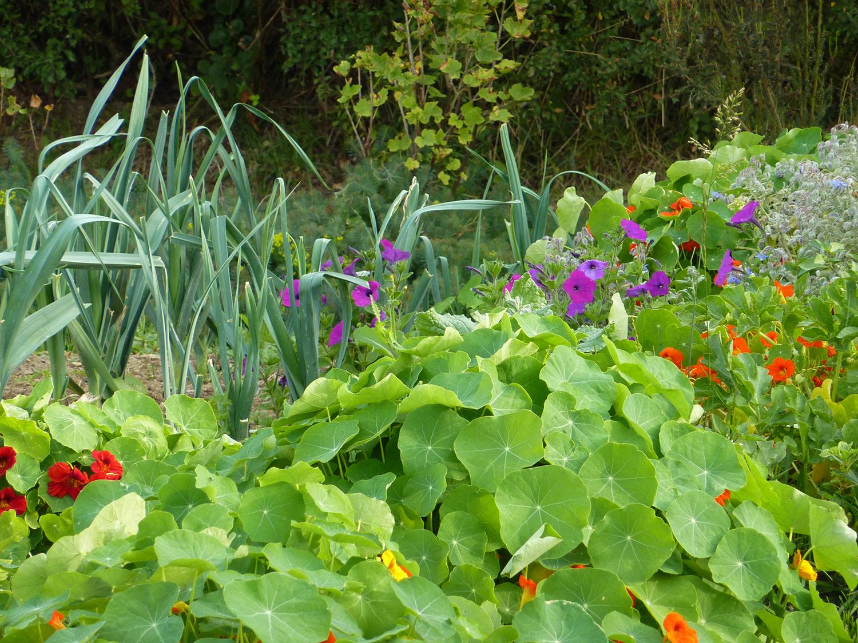 Jardin Acemus